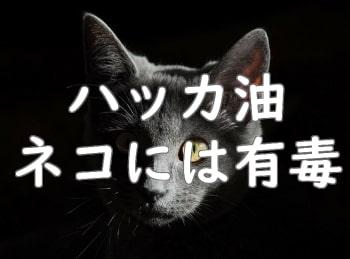 猫にハッカ油